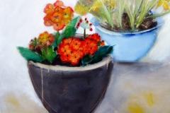 Primulas and Daffodils